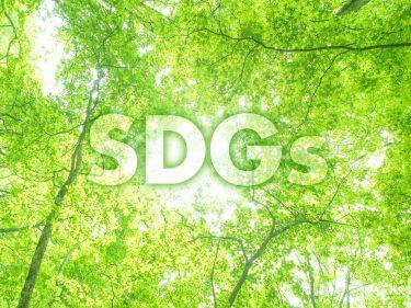 木材産業を通じて自然と人に優しい社会へ!林業ならではのSDGsとは?